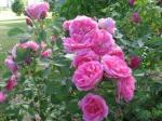 rose morden centennial
