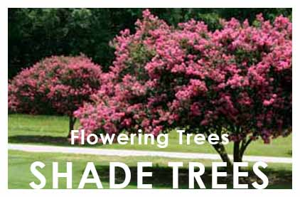 2016-Widget-Shade-Flowering-Trees